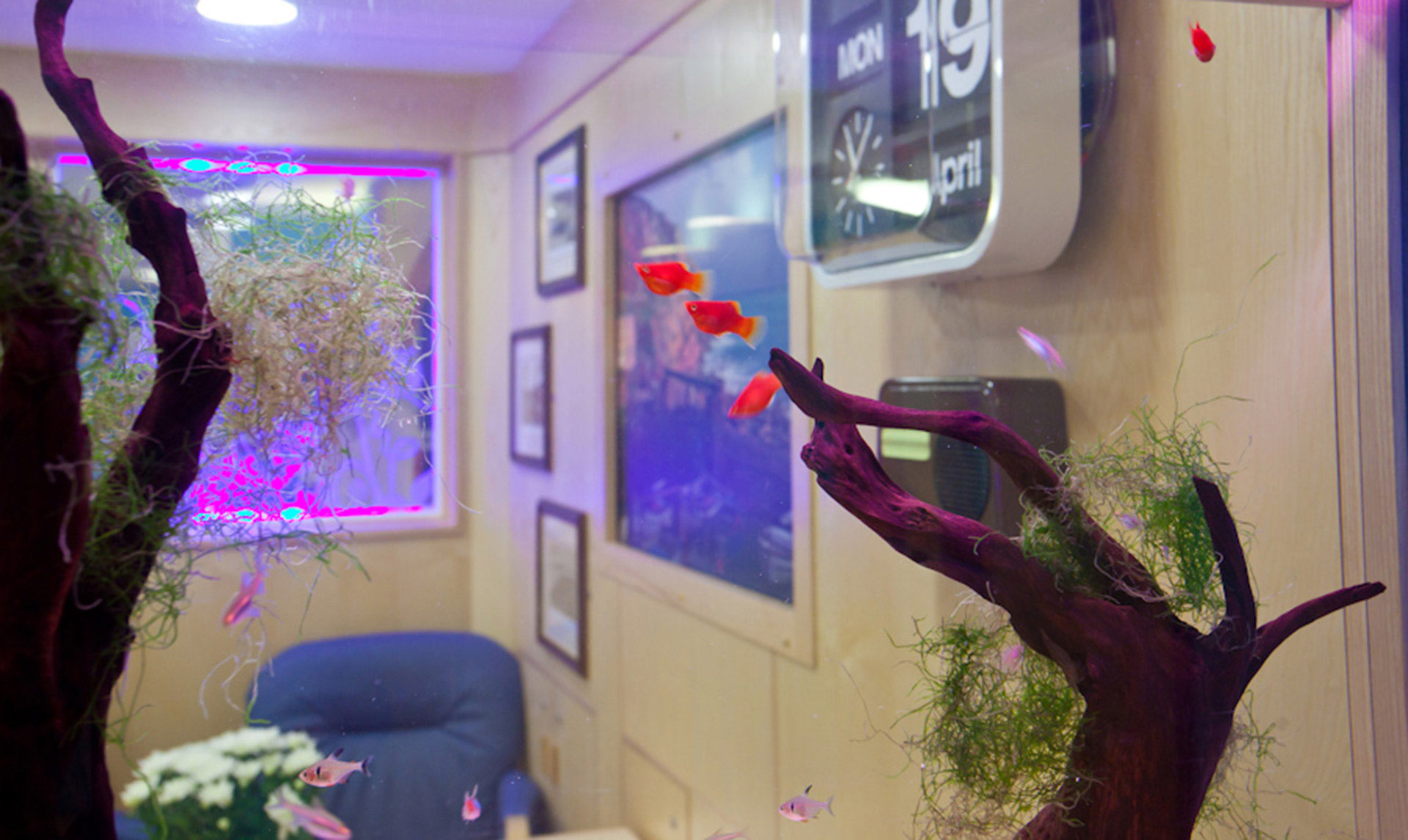LED lit acrylic fish tank provides a calming atmosphere for patients at Dementia Ward